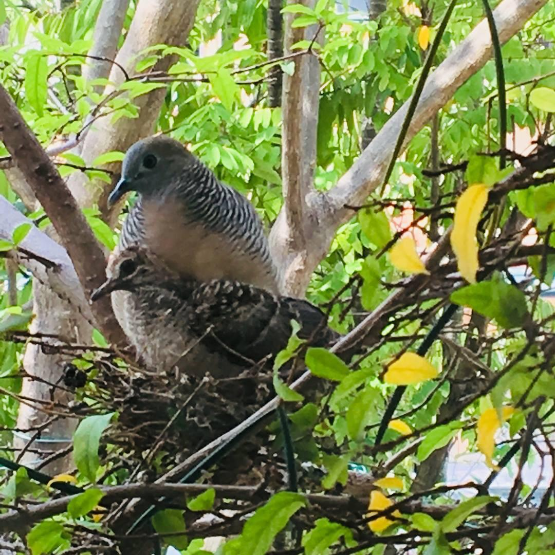 门外树上的鸟窝,它们也住在首邦